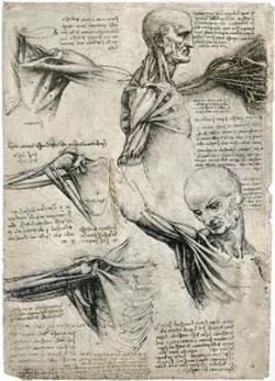 human anatomy renaissance